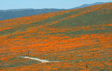 Super Bloom of Activists - What do I do?